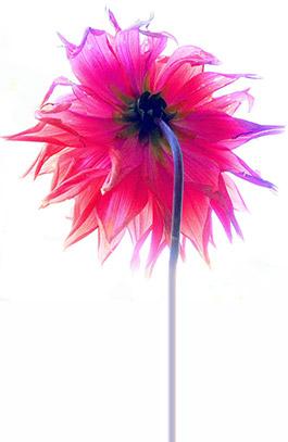 pink-flower-med-spa-265