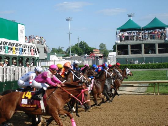 Race Horses Leaving the Gate at Saratoga Race Track